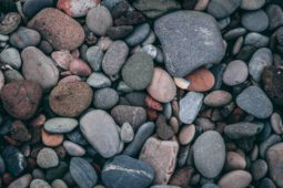 Taking Time to Grow Series: Exploring Math Concepts with Rocks